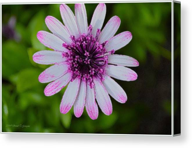 Pleasingbeauty Canvas Print featuring the photograph Pleasing Beauty by Sonali Gangane