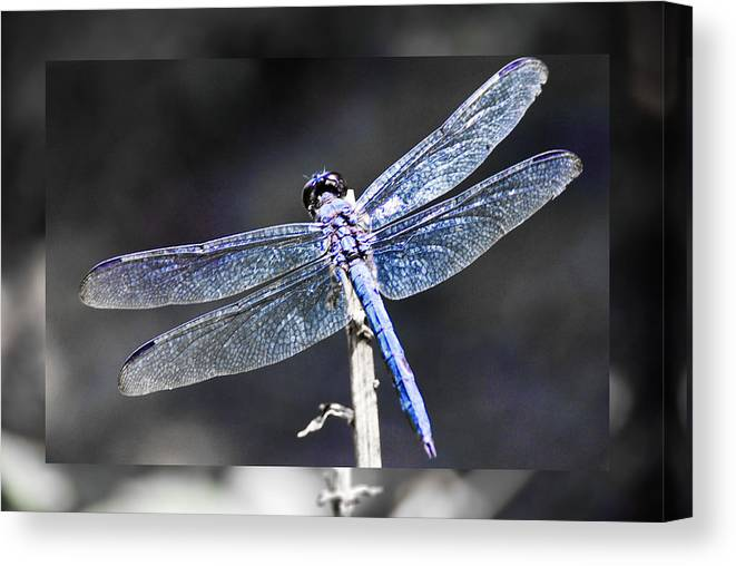 Wings Canvas Print featuring the digital art Spreading Her Wings by Linda Segerson