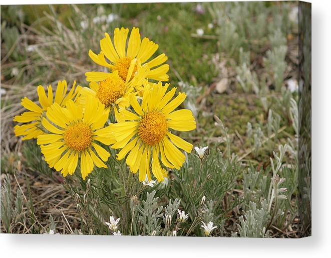 Flowers Canvas Print featuring the photograph Sunny Flowers by Gregory Yost