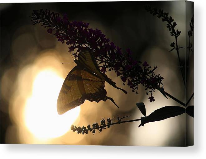 Solace Canvas Print featuring the photograph Swallowtail Light by David Jones