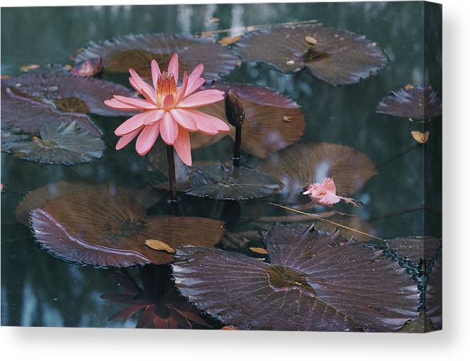 mc Kee Garden Canvas Print featuring the photograph Untitled by B. Anthony Stewart