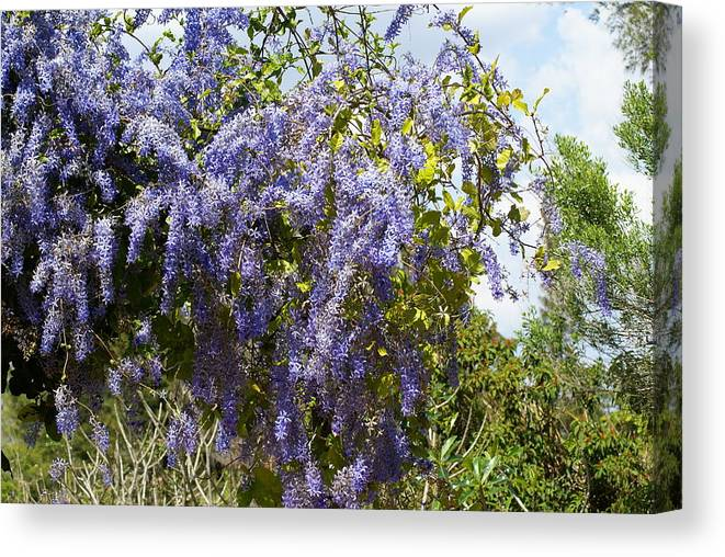 Nature Canvas Print featuring the photograph Dripping In Violet by Florene Welebny
