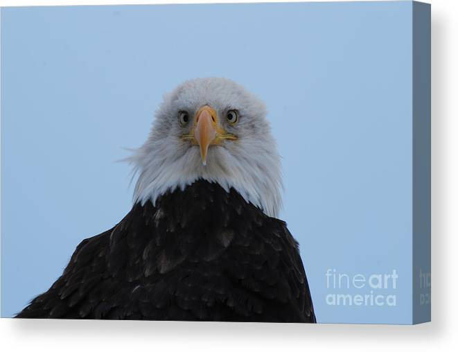 Eagle Canvas Print featuring the digital art Eagle In The Wind by Jamie Riley