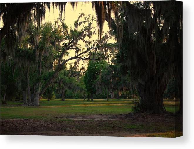 Oaks Canvas Print featuring the photograph Evening In The Mossy Oaks by Beth Gates-Sully