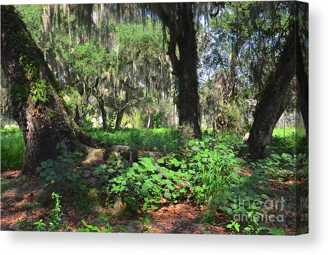 Forest Canvas Print featuring the photograph Florida Forest by Carol Bradley