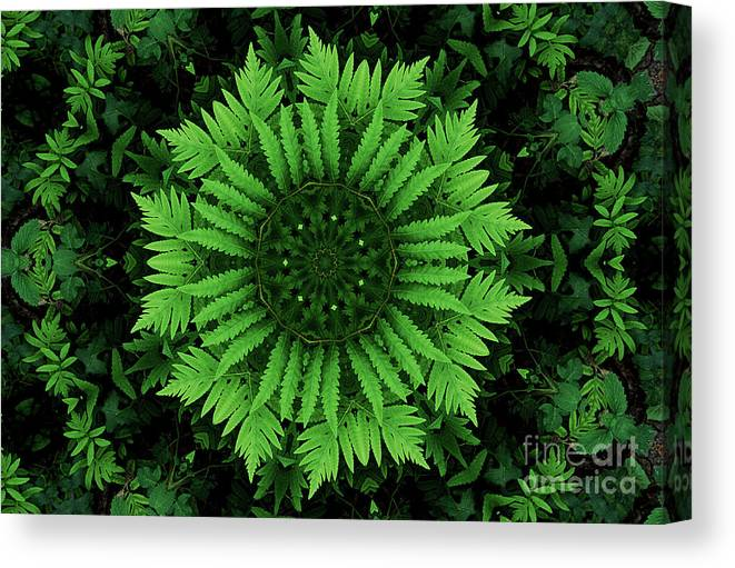 Green Canvas Print featuring the photograph Green Forest Ferns Mandala - 2 by Renata Ratajczyk