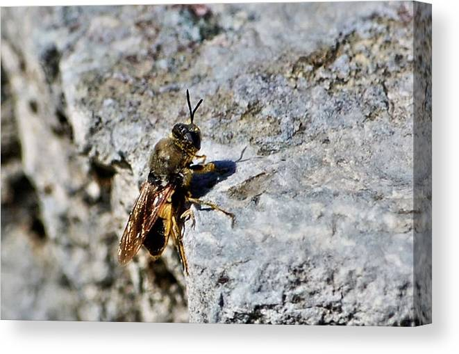 Fly Canvas Print featuring the photograph Hang In There Baby by Don Mann
