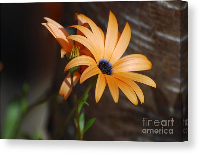 Floral Canvas Print featuring the digital art Neon Flower by Jamie Riley