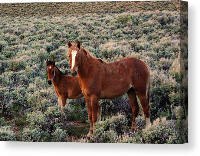 Horse Canvas Print featuring the photograph Sage by Donna Duckworth