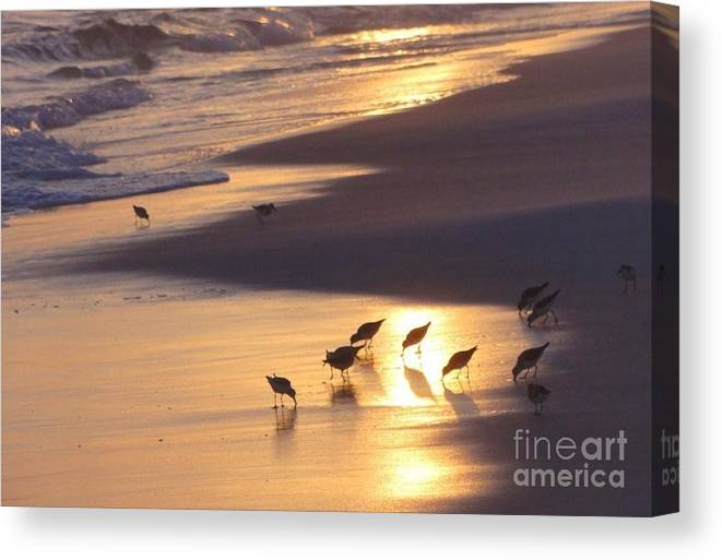 Nature Canvas Print featuring the photograph Sunset Beach by Nava Thompson