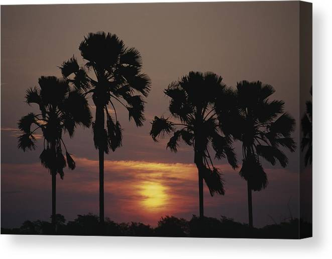 Plants Canvas Print featuring the photograph Sunset On Shire River by Anne Keiser