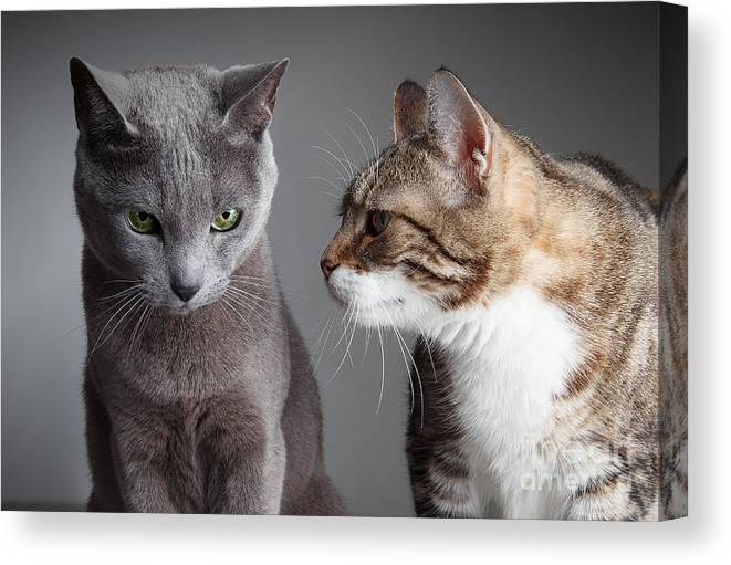 Cat Canvas Print featuring the photograph Two Cats by Nailia Schwarz