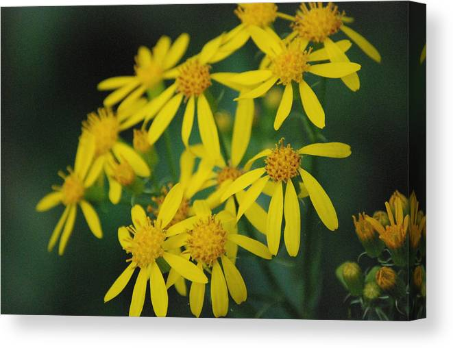 Flowers Canvas Print featuring the photograph Yellow Flowers by Beth Gates-Sully