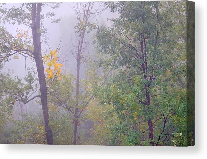 Foggy Canvas Print featuring the photograph Yellow In The Fog by Guido Montanes Castillo