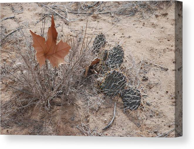 Desert Canvas Print featuring the photograph East Meets West by Rob Hans