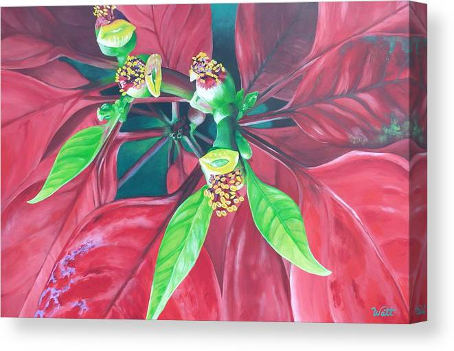 Poinsettia Canvas Print featuring the painting Still Thriving In May by Tammy Watt