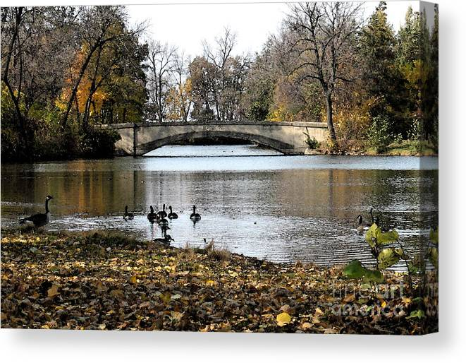 Nature Canvas Print featuring the photograph Tenney Park by Gary Everson