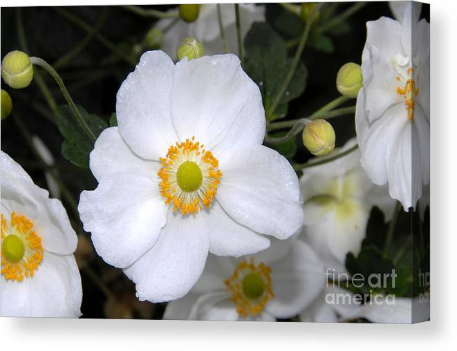 White Canvas Print featuring the photograph White Wonder by David Lee Thompson