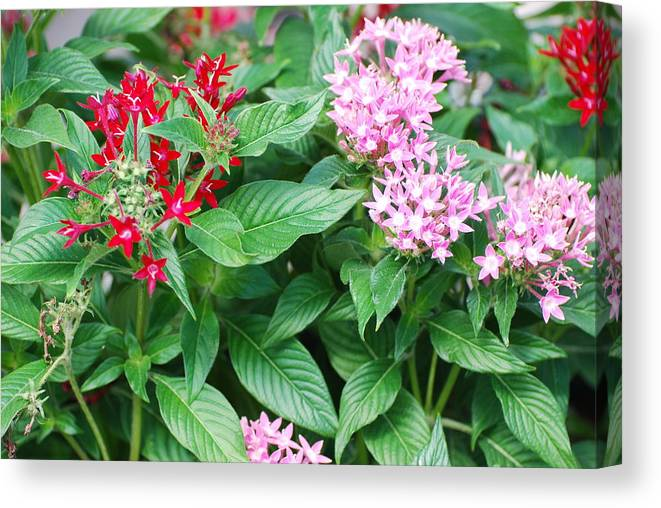 Flowers Canvas Print featuring the photograph Flowers by Rob Hans