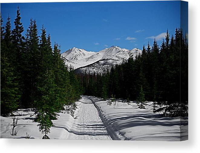 Anchorage Mountains White Trees Canvas Print featuring the photograph Anchorage Mountains by Galeria Trompiz