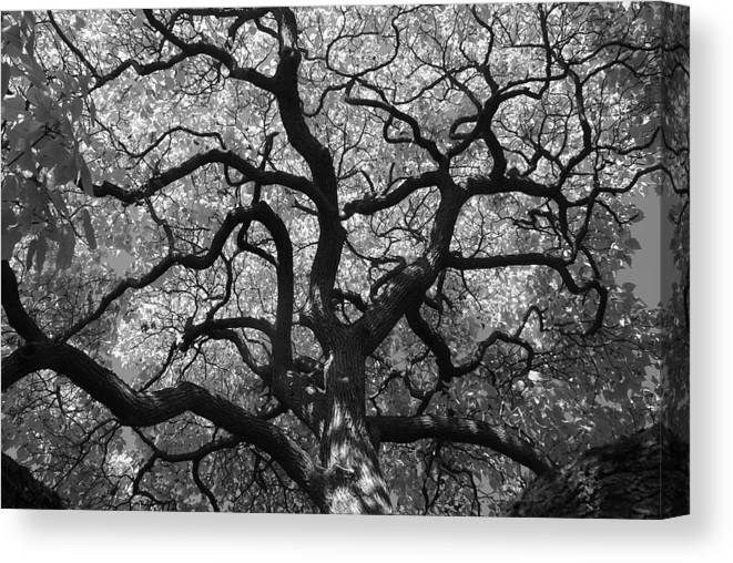 Tree Canvas Print featuring the photograph Autumn Bloom by Sonja Anderson