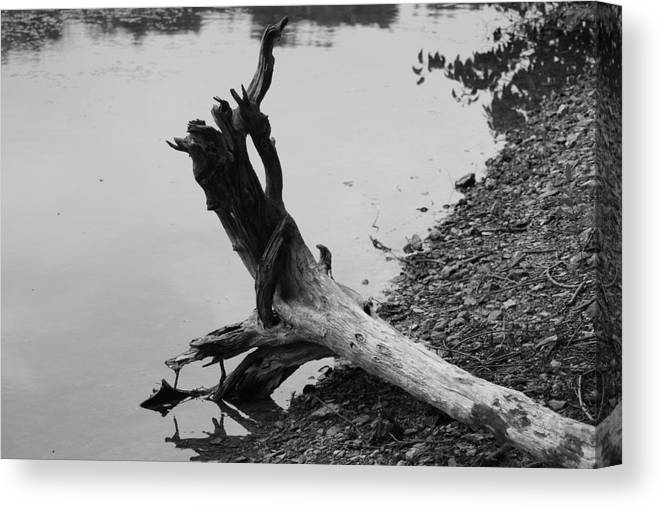 Scenic Canvas Print featuring the photograph Black And White by Heather Green