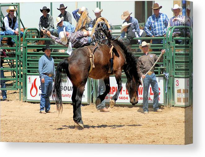 Rodeo Photos Canvas Print featuring the photograph Brutus by Cheryl Poland