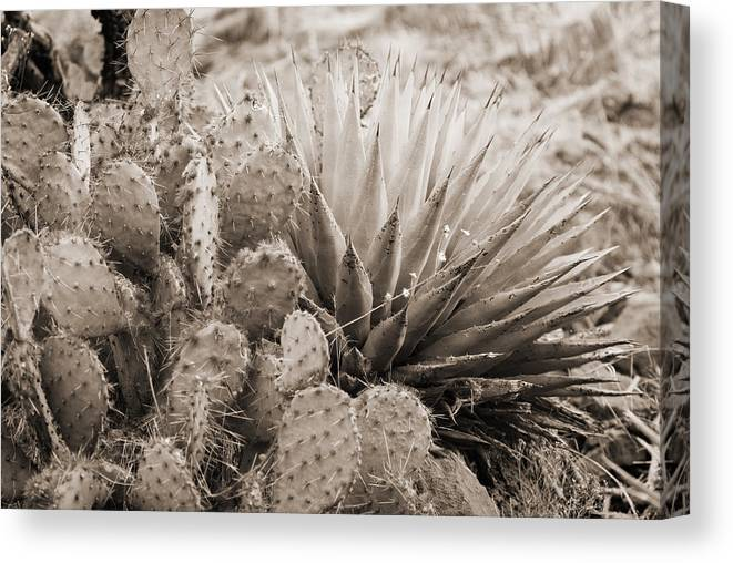 Prickly Pear Cactus Canvas Print featuring the photograph Cactus by Bob Coates