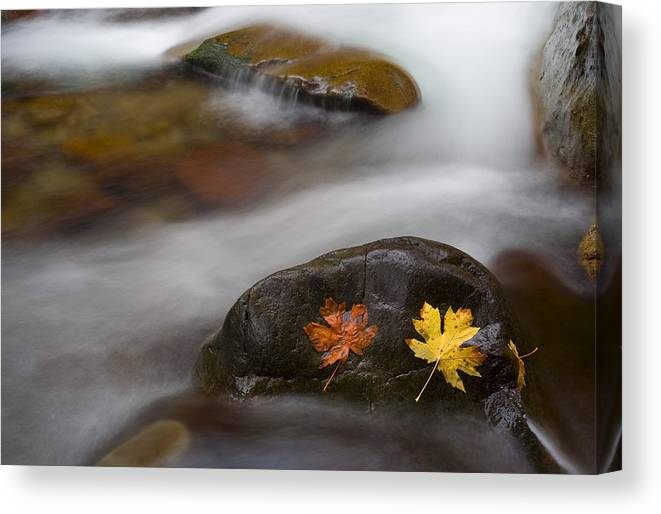 Leaves Canvas Print featuring the photograph Castaways by Mike Dawson