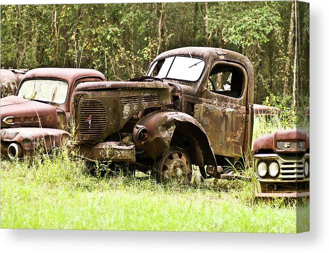Color Photograph Canvas Print featuring the photograph Caught In The Middle by Wayne Denmark
