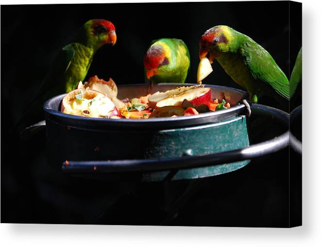 Animals Canvas Print featuring the photograph Delicacies by Robert Boyette