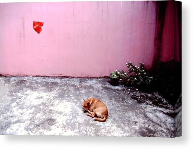 Dog Canvas Print featuring the photograph Dreaming Of The Weekend by John Gerstner