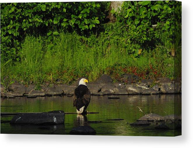 Eagle Canvas Print featuring the photograph Eagle On River Rock II by Alice Markham