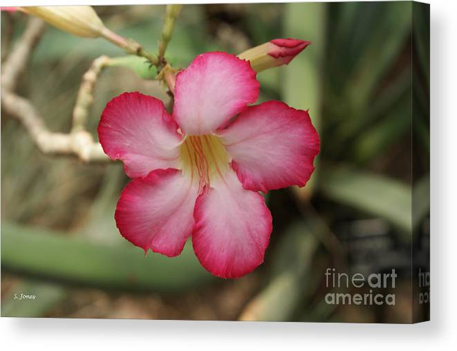 Floral Canvas Print featuring the photograph Elegant by Shelley Jones