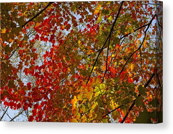 Fall Canvas Print featuring the photograph Fall 2010 11 by Robert Ullmann