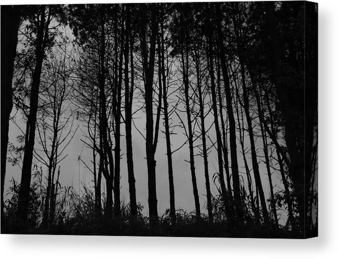 Forest Canvas Print featuring the photograph Forest by Stefan Breton
