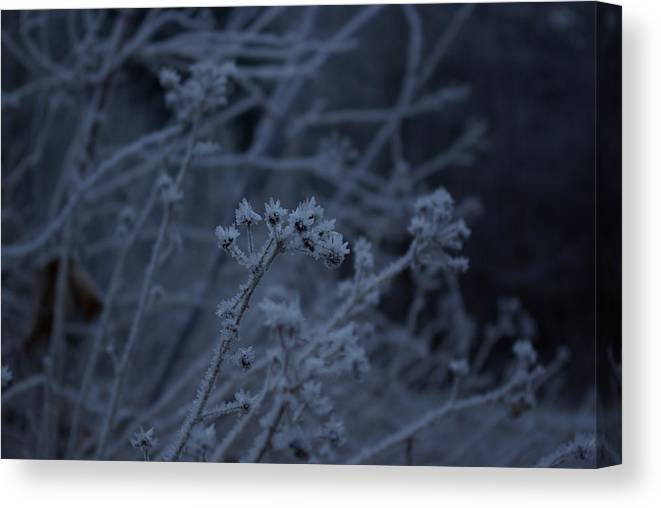 Frozen Canvas Print featuring the photograph Frozen Buds by Cindy Johnston