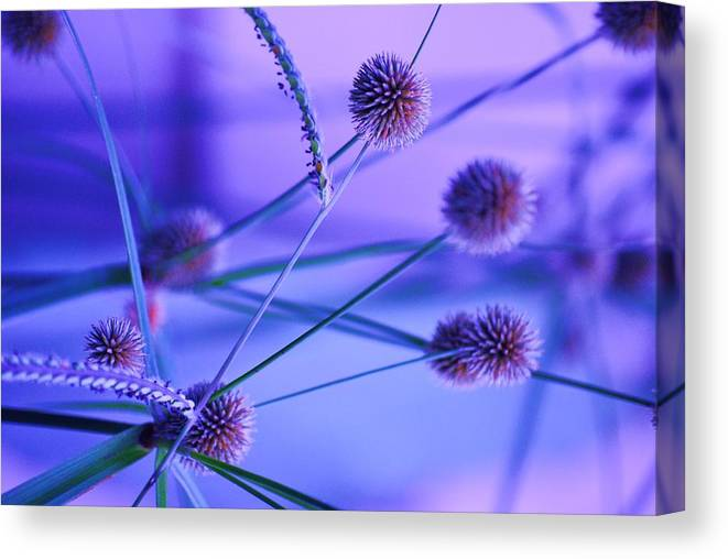 Nature Canvas Print featuring the photograph Funky Weeds by Trudi Southerland