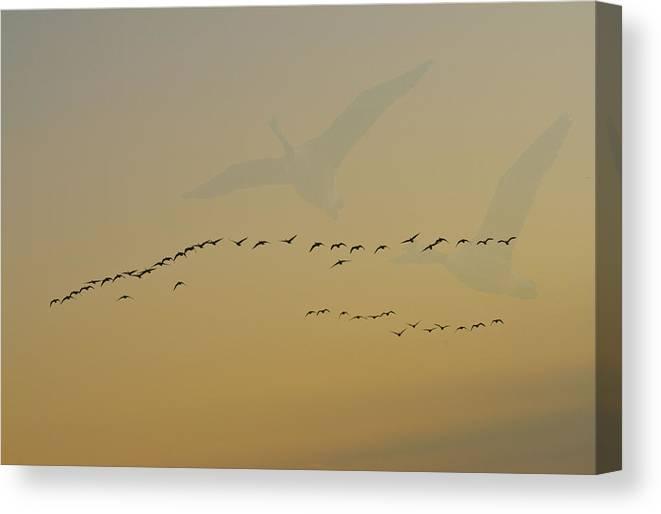 Geese Canvas Print featuring the photograph Geese In Flight by Wendy Fike