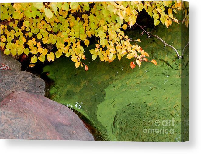 Lake Waramaug Canvas Print featuring the photograph Green Slime by Andrea Simon