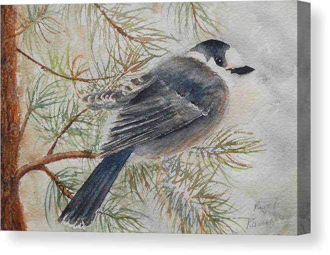 Bird Canvas Print featuring the painting Grey Jay by Ruth Kamenev