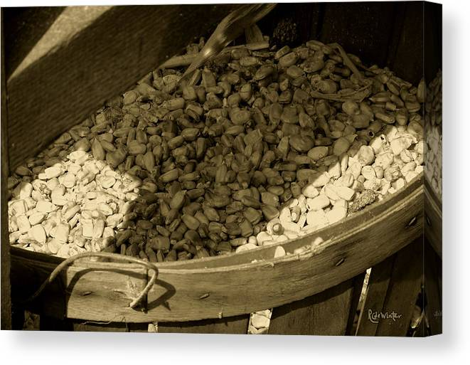 Agriculture Canvas Print featuring the photograph Grist For The Mill by RC DeWinter