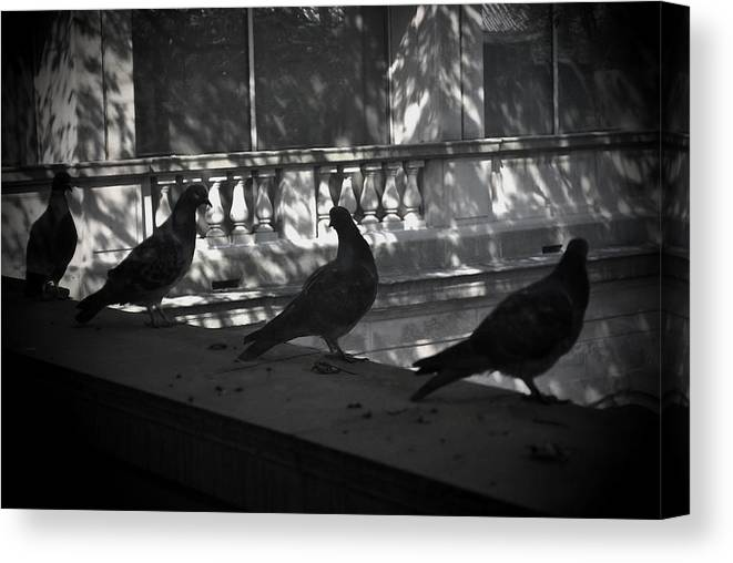 Birds Canvas Print featuring the photograph Holding Court by Tim Nyberg