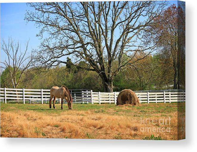 Landscape Canvas Print featuring the photograph Horse And Hay by Todd Blanchard
