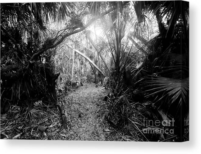 Jungle Canvas Print featuring the photograph Jungle Trail by David Lee Thompson