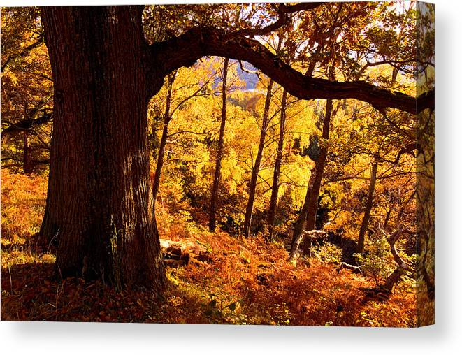 Aira Force Canvas Print featuring the photograph Lake District - Fall Colors Near Aira Force by Dave Lawrance