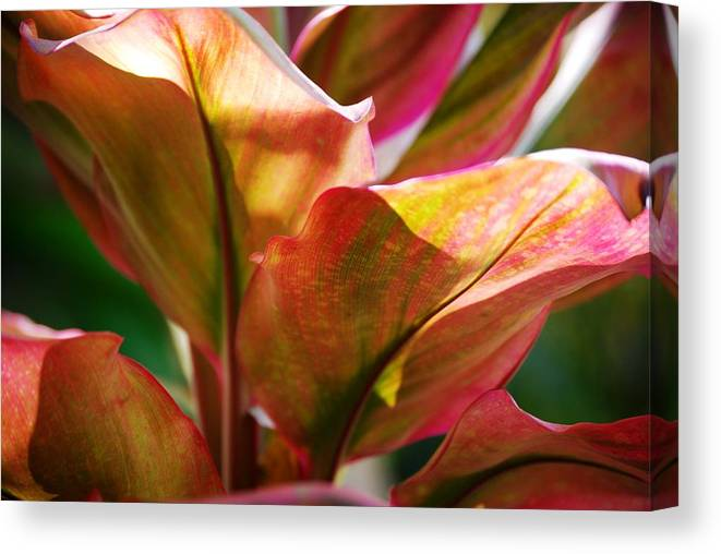 Plants Canvas Print featuring the photograph Leafs by Lakida Mcnair