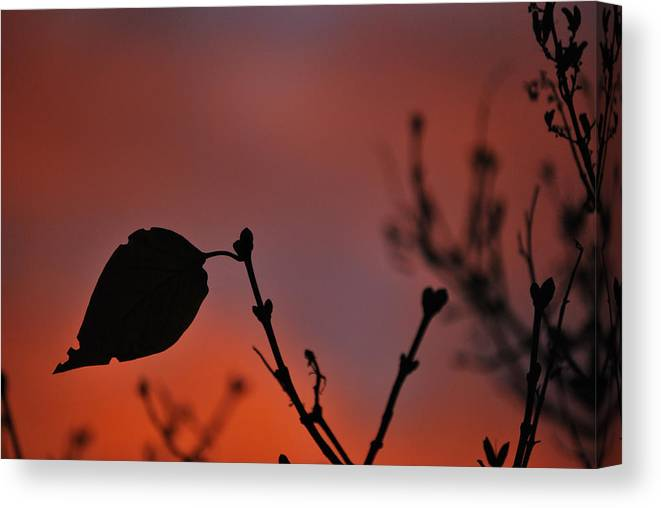 Leaf Canvas Print featuring the photograph Lonely Leaf by Matthew Fredricey