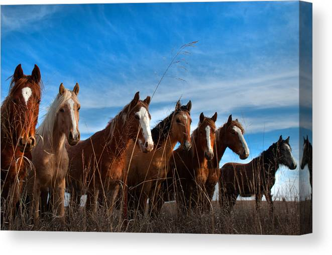 Horses Canvas Print featuring the photograph Magnificent Seven by Jolynn Reed