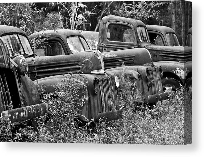 Black And White Photography Canvas Print featuring the photograph On The Sidelines by Wayne Denmark
